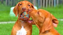 psi míčky milují