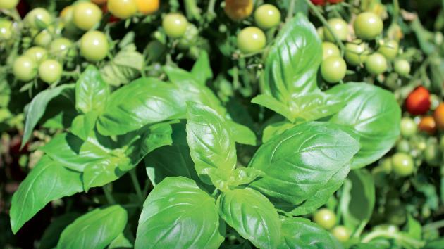 Postřiky se často jeví jako jediná možnost, jak ochránit rostliny před škůdci