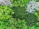 Listy aromatických bylinek jsou léčivým kořením a ještě pěkně vypadají