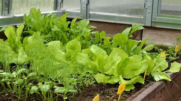Čerstvý kopr či bazalka je se skleníkem skutečností i v chladném podzimu.
