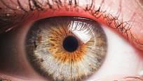 Oční duhovka mívá různé zbarvení.