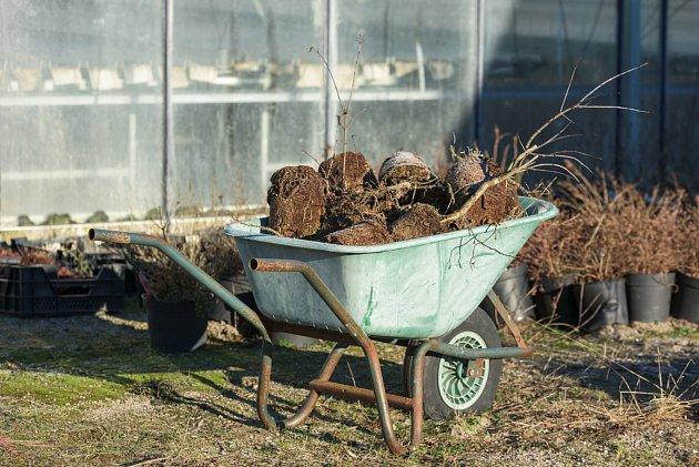 KOřenové baly letniček, které dosloužily, vyjmeme, nádoby a celý skleník vyčistíme