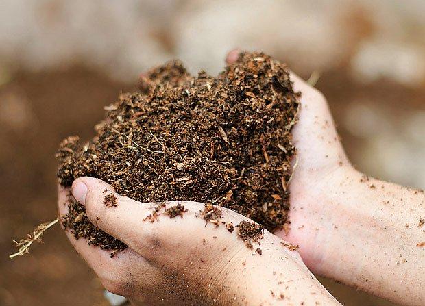 Půdu lze vylehčit kompostovanou štěpkou i listím