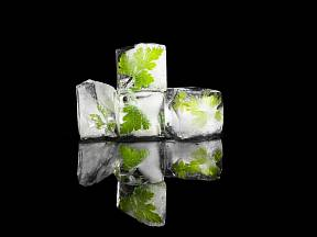 Ledové bylinné kostky.