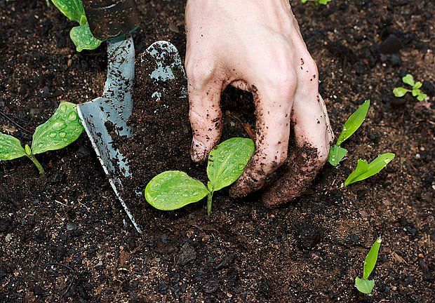 Dobrý substrát je základ úspěšného pěstování