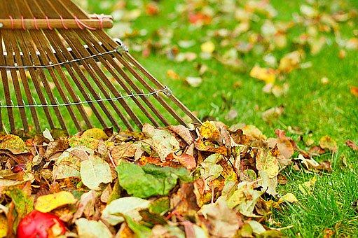 listí zdobící trávník je třeba před zimou shrabat