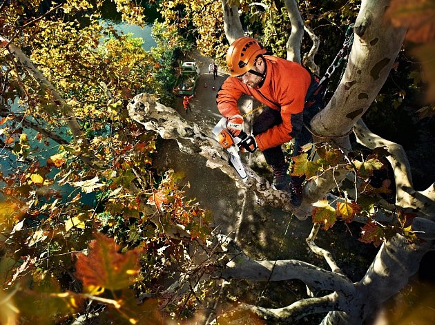 Malá pila pro stromovou chirurgii
