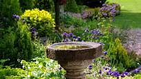 Ptačí napajedlo jako užitečná ozdoba zahrady