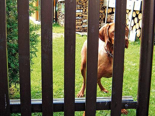 dřevěný plot vyžaduje péči v podobě opakování nátěru