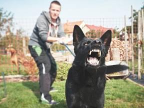 Každý majitel psa by měl u svého psa poznat, kdy se chystá zaútočit.