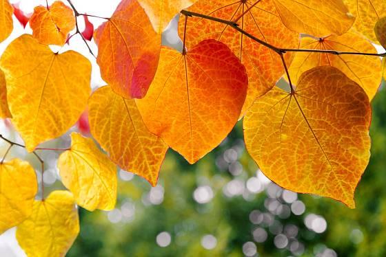 Podzimně zbarvené listy.