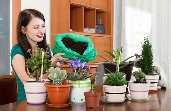 Koncem zimy je ideální čas pro přesazení pokojových rostlin.