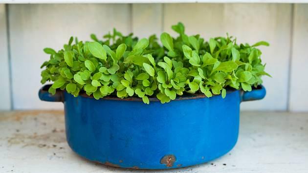 Zahradničení ve čtvrtém lednovém týdnu: Co se vyplatí zasít časně?