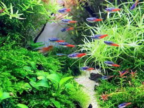 Pohled na akvárium je velmi příjemný