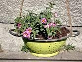 Hotový závěsný květináč s minipetúniemi.