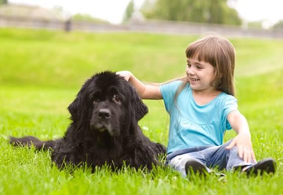 Novofundlandský pes je skvělý hlídač malých dětí.