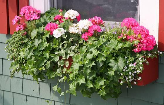 Okenní truhlíky můžete osadit jednoduchou, ale i náročnou sestavou květin.