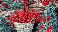 Větvičky plné červených bobulí skvěle padnou ke většině vánočních dekorací.