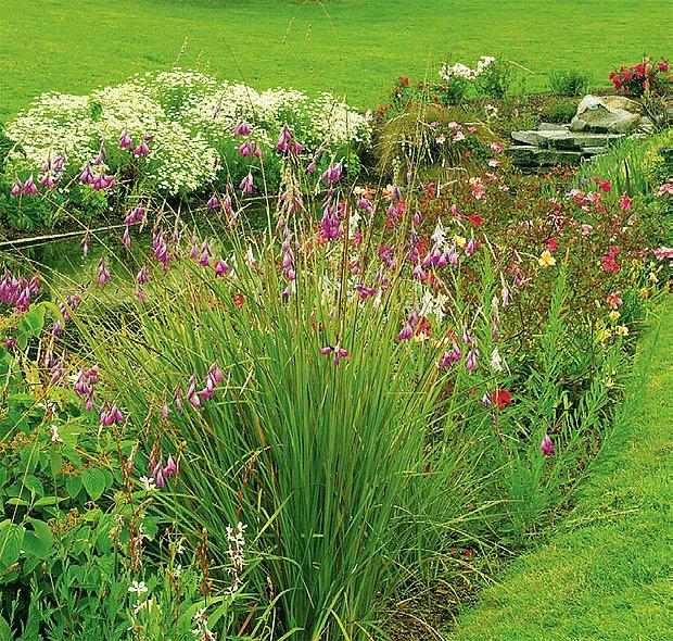 záhon v trávníku