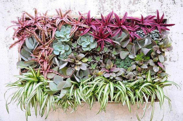 Zelená stěna pojme obrovské množství rostlin.