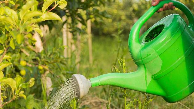 Zalévat lze i odpadní vodou z domácnosti