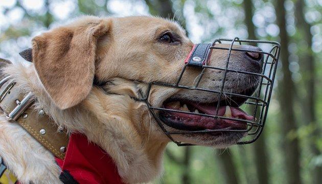 Se psem bez náhubku vás nepustí do žádného dopravního prostředku.