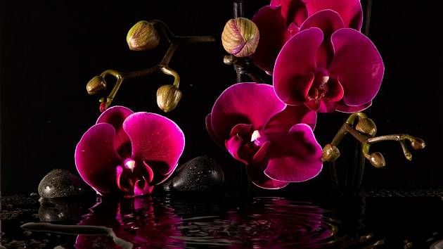 Zalévání orchidejí není žádná velká věda, ale je důležité znát základní pravidla.