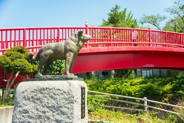 V Japonsku postavili pomník pro Akita inu, který po smrti svého pána neopustil místo, kde se každodenně setkávali.