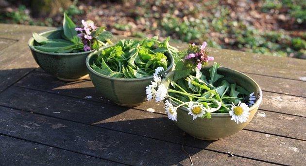 léčivé a jedlé jarní bylinky
