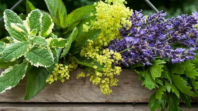 Pestré bylinky v truhlíku pohladí oko, provoní byt a ochutí pokrmy.