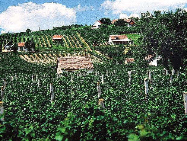 Kam za vínem v Maďarsku