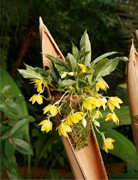 Výstava orchidejí v pražské Fata morganě.