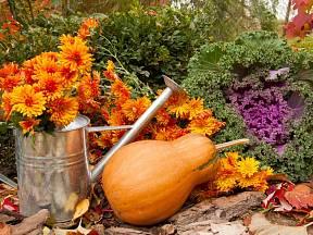 Podzimní zahrada.