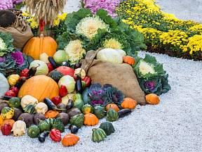 Ještě i v červenci můžete vysadit některou zeleninu