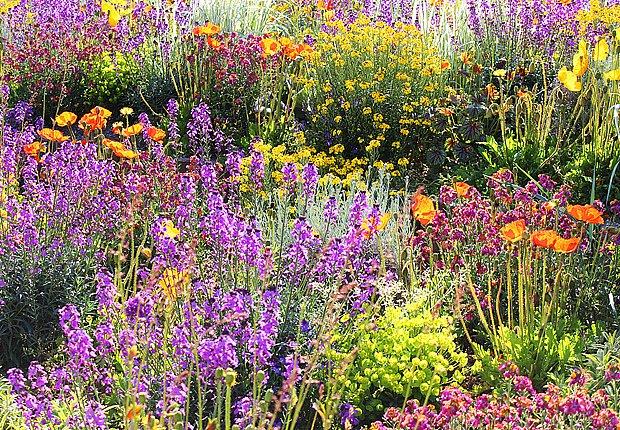 Květinové záhony jsou jako obrazy, které vybarvila příroda a zahradník