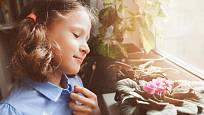 Africká fialka (Saintpaulia ionantha) patří mezi rostliny, které bez obav mohou zaujmout místo na parapetu okna dětského pokoje.