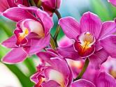 Raci vždy odejdou z květinářství s orchidejí