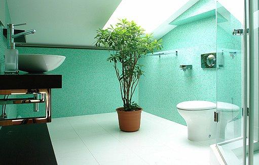 kytka pod oknem v koupelně