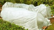 Ochrannou textilii můžeme položit přímo na rostliny, nebo na konstrukci