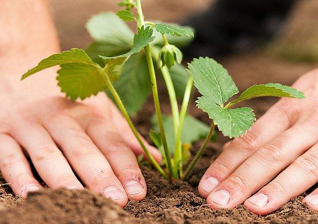 Každý rok můžete vyzkoušet nové odrůdy