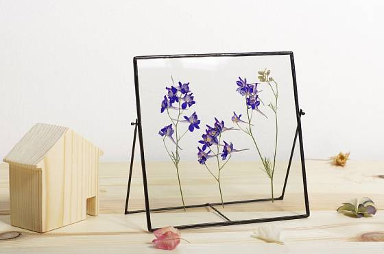 Obrázek z vylisovaných květin ve skleněném rámečku.