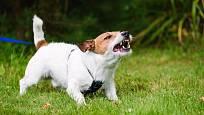 Povaha psů je individuální.