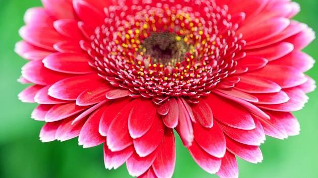 Krásné květy jsou chloubou každého zahrádkáře