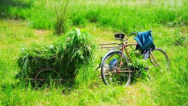 Posekanou trávu můžete vhodně využít!