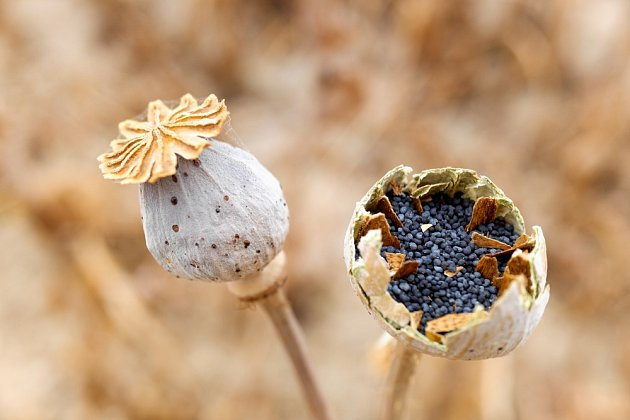 Rostlin vhodných pro sběr semen je mnoho.