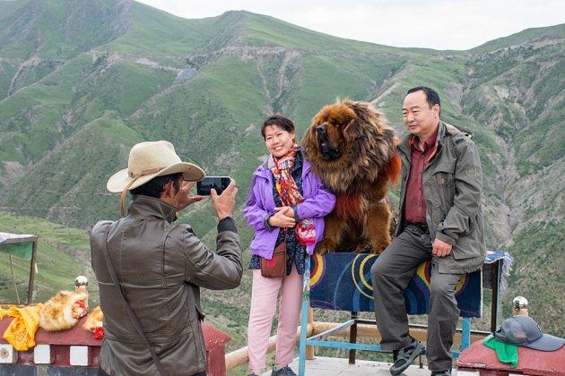 Čínští turisté se fotografují s tibetskou dogou v jednom z tibetských horských průsmyků.