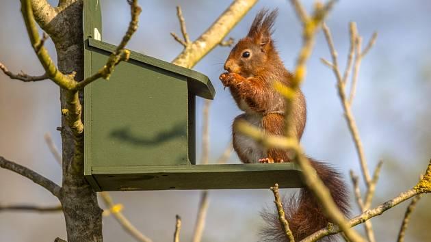Speciální krmítko určené pro veverky.