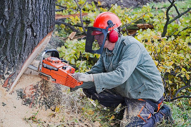 Profesionální dřevorubci používají biooleje kvůli ochraně životního prostředí.