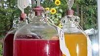 Ovocná vína kvasí v demižónech