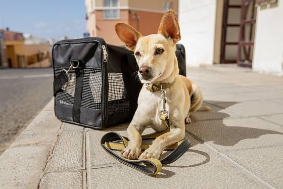 S dobře vychovaným psem se dá cestovat všude.
